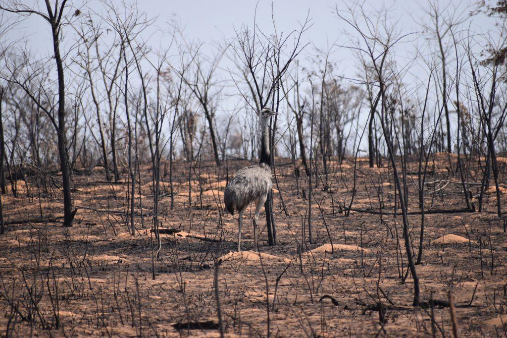 Zona devastada por incendios en Ñembi Guasu, en Bolivia. Foto: Nativa
