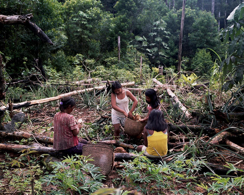 Mujeres indígenas recogen alimentos en sus chagras. Foto: Stefan Ruiz, Fundación Gaia Amazonas.