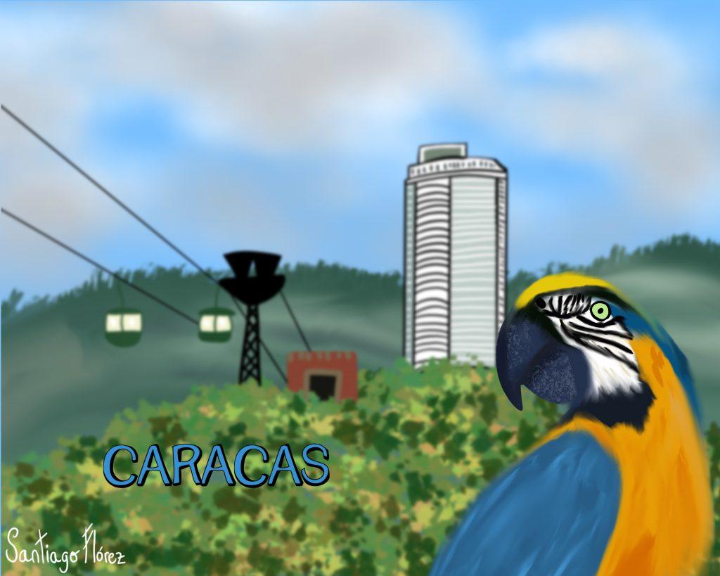 Ilustración de una guacamaya azulamarillo en Caracas, Bogotá.