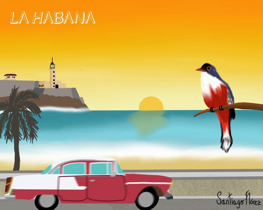 Ilustración de un tocororo en La Habana