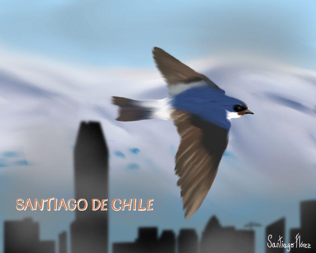 Ilustración de una golondrina chilena en Santiago de Chile