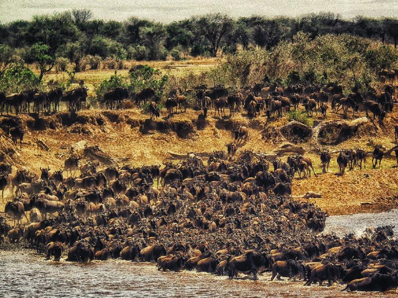 Cada año más de un millón de ñus migran a través del ecosistema del Serengeti. Crédito: Unsplash/Rohan Reddy