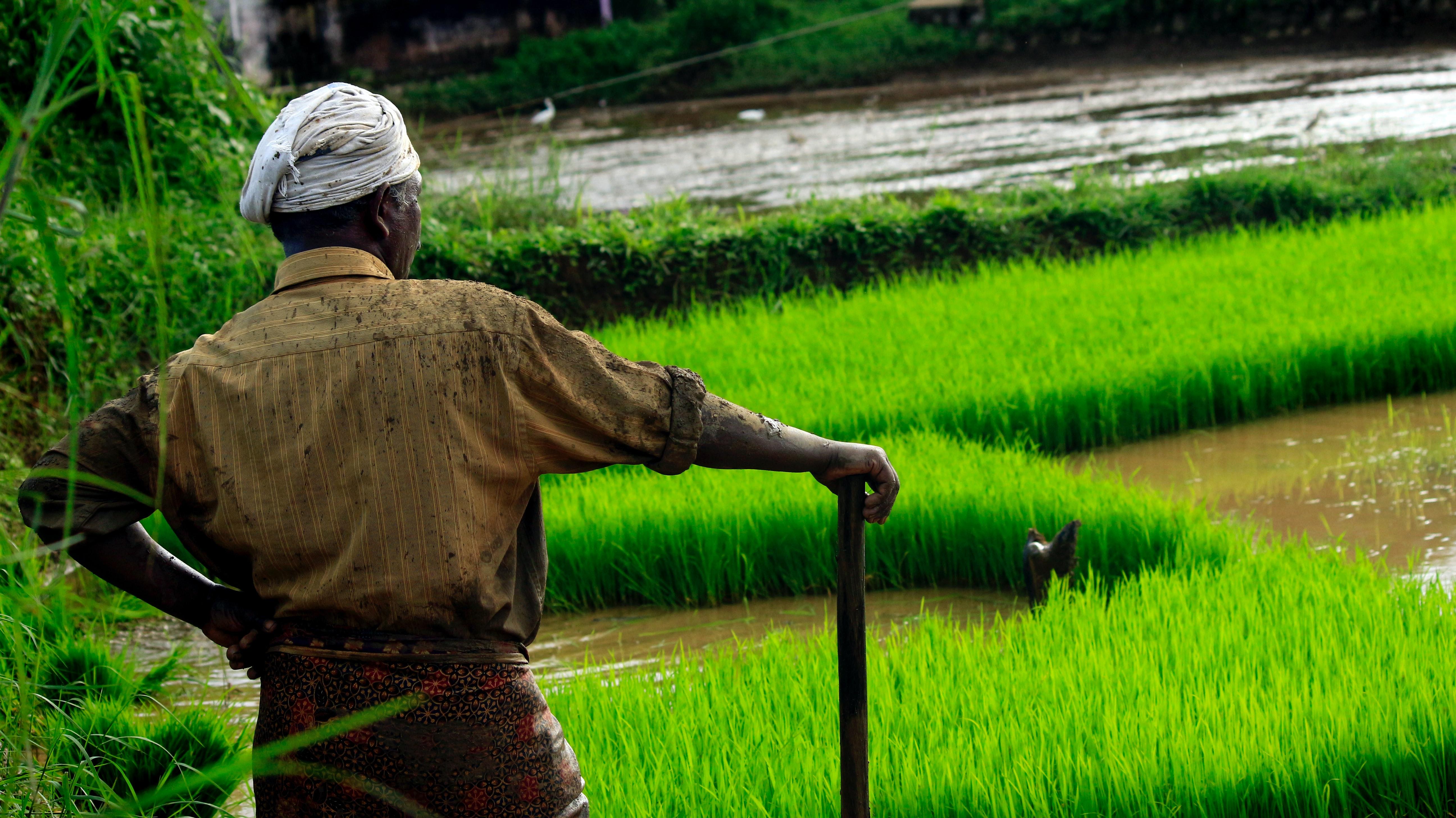 Un hombre parado en un campo de arroz
