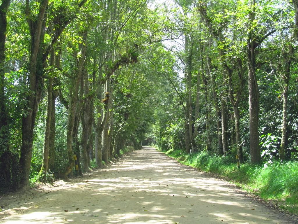 árboles alineados en un camino con sombra en un bosque urbano el Bogotá.