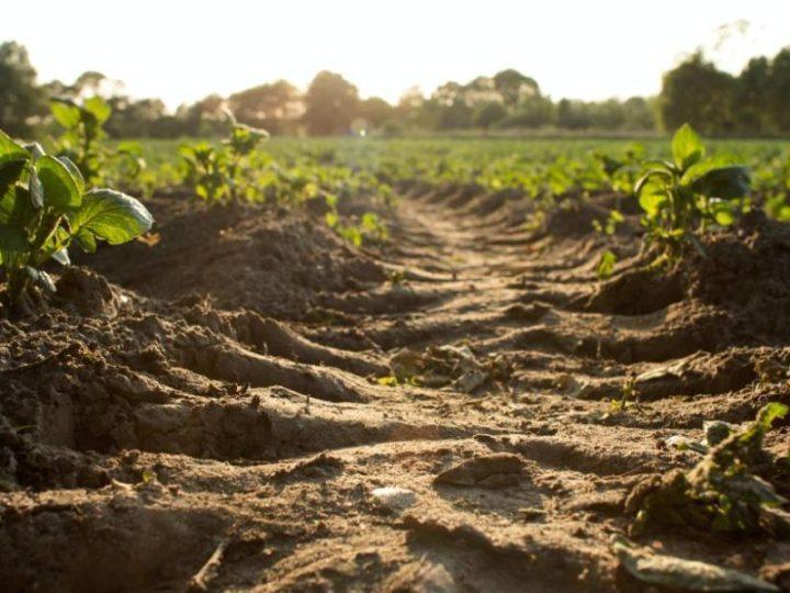 Vista desde el suelo de una marca de tractor en un suelo de un campo de cultivos.